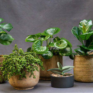 Selection_of_indoor_plants