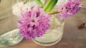 aspen_hyacinths