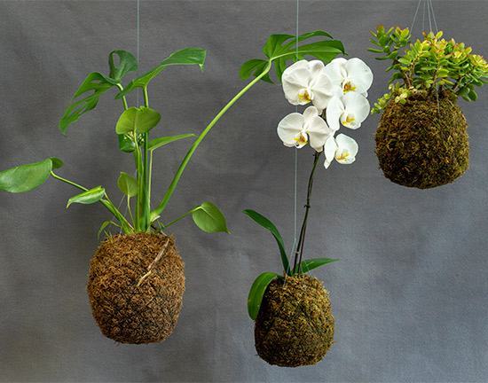 footer image of planters