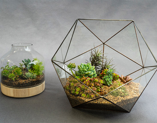footer image of terrariums